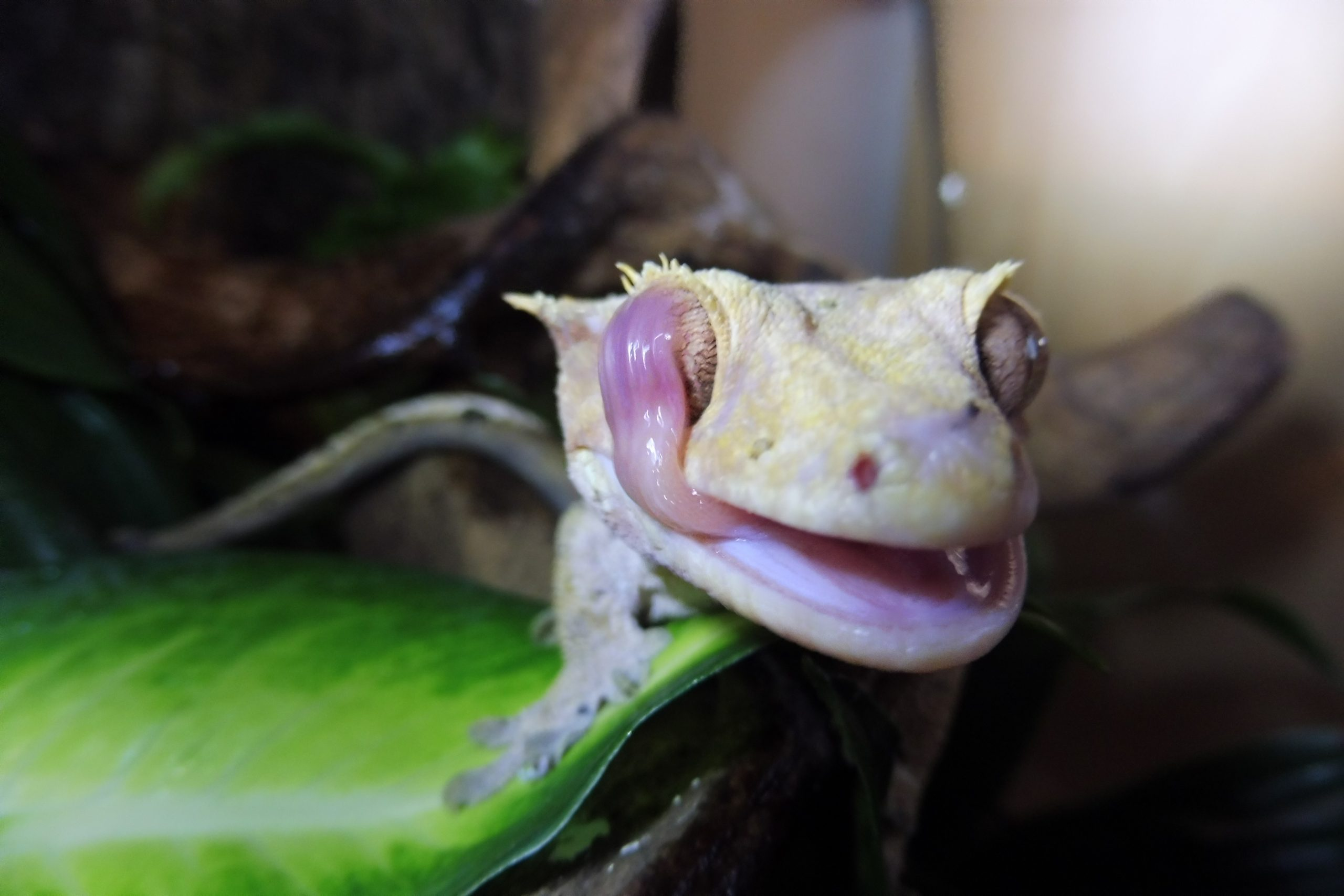 Portsmouth Reptile and Amphibian Society